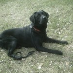 Cooper May 09