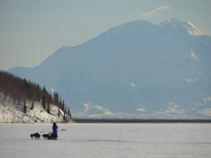 Mushing across a lake